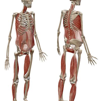 全身の筋肉を連動して働かせるためには体幹に加えてここの筋肉を使え!の記事に添付されている画像