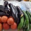 飛騨の野菜