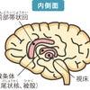 老けない体内環境を作る脳の動かし方の画像