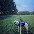 超早朝散歩はじめました・・・の記事より