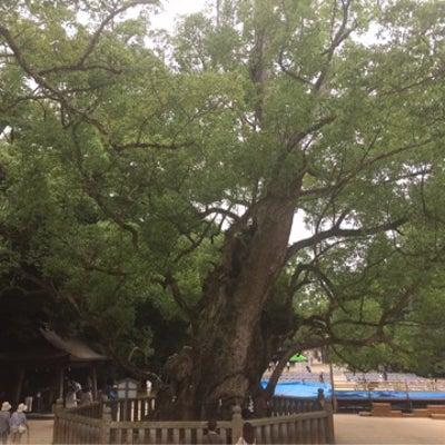 生樹の御門&初!コアントロー (大三島) ♪の記事に添付されている画像