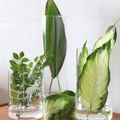 ★夏はお花の代わりにグリーンで♪大きめの葉っぱで爽やかディスプレイ