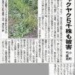 (株)小町芍薬苑より