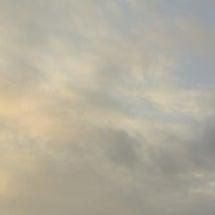 ◆久々の早朝散歩猫っ…