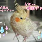 【重要】4周年感謝祭当選者発表!!その1