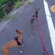 最近の朝散歩☆