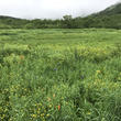 初夏の栂池自然園レポ…