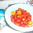 プチトマトすくい♪