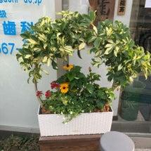 入口に新しくお花(^…