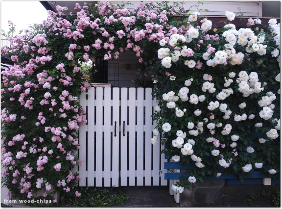バラの庭 ゲート