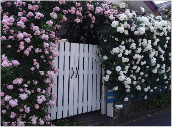 バラの庭 白い扉