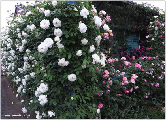 バラの庭 フェンス