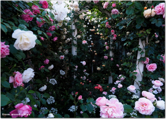 バラの庭 アーチ