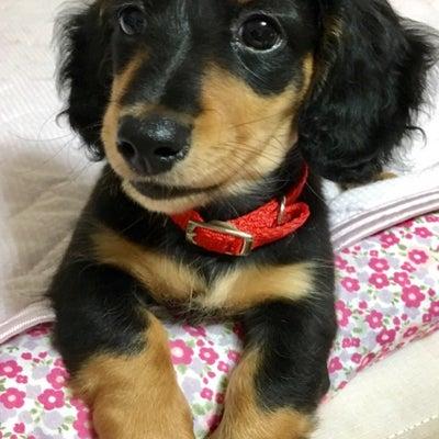 引き寄せ犬チャクラの記事に添付されている画像
