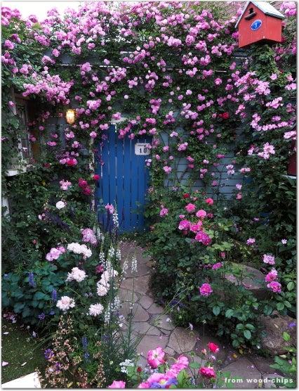 バラの庭 誘引