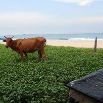 スリランカ紀行 その6 トリンコマリーにてスキューバダイビングの記事に添付されている画像