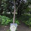 ダブリンの広島平和記…