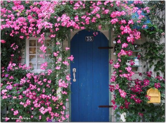 バラ 窓辺の誘引