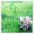 魅惑の雑草ランド