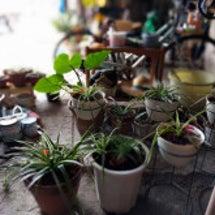 植物は癒しダヨ♪