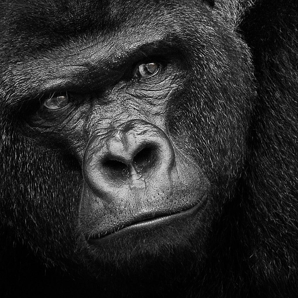 年上好きのオス猿と年下好きの男性 | のむのむの婚活 七転び八起き