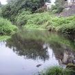真夏の北浅川 放流日