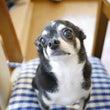 ヨーグルト犬。