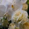 好きな花!旬な花!インスピレーションを感じた花!を♪の画像