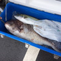 今日の釣果報告