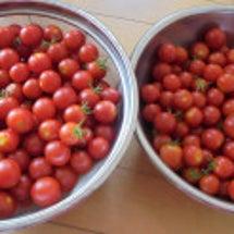 真っ赤なトマト~☆