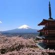 田貫湖で桜Wダイヤモ…
