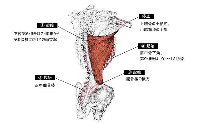 筋肉と内臓と経絡の関連性8