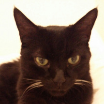 猫の腺ガン治療につい…