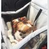 わんこと一緒に初めての旅行!犬連れで山中湖・伊豆河津にお泊り。の画像