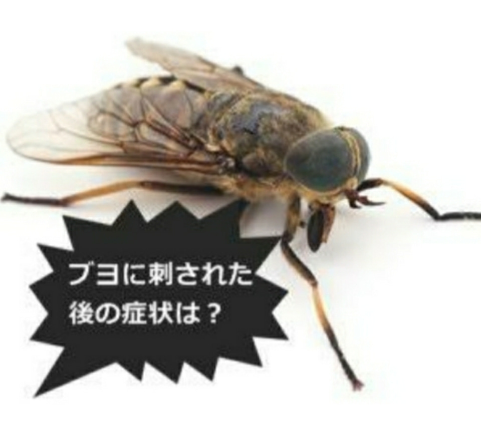 恐るべしブヨ!!!