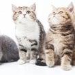 初・4匹の猫ニャンと…
