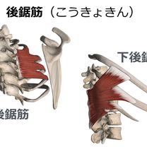 【ストレッチ】後鋸筋(こうきょきん)のストレッチ方法の記事に添付されている画像