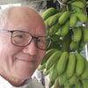 与論島のバナナの画像