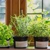土壌が良ければ植物は元気 千歳市 口コミ 1位 美容室 ルーツ ツヤ髪の画像