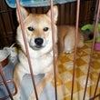 柴犬の夏バテ対策