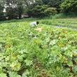 無肥料栽培の作り方 …