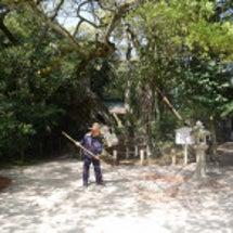 大山祇神社の落ち葉掃…