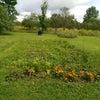 今日の畑で初種取りの画像