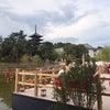 奈良の池床視察(小川)の画像