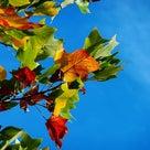 秋といえば、この季節でもありますの記事より