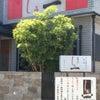 西浜の本格派和食の隠れ家「しる一 (しるいち)」和歌山 西浜 和歌浦の画像
