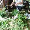 お花の稽古 8月25日の画像