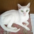 御長寿猫シィちゃん!…