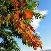 秋風が吹く原村〜8月最後の日曜日の画像