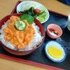 馬糞ウニ食べに利尻島への画像
